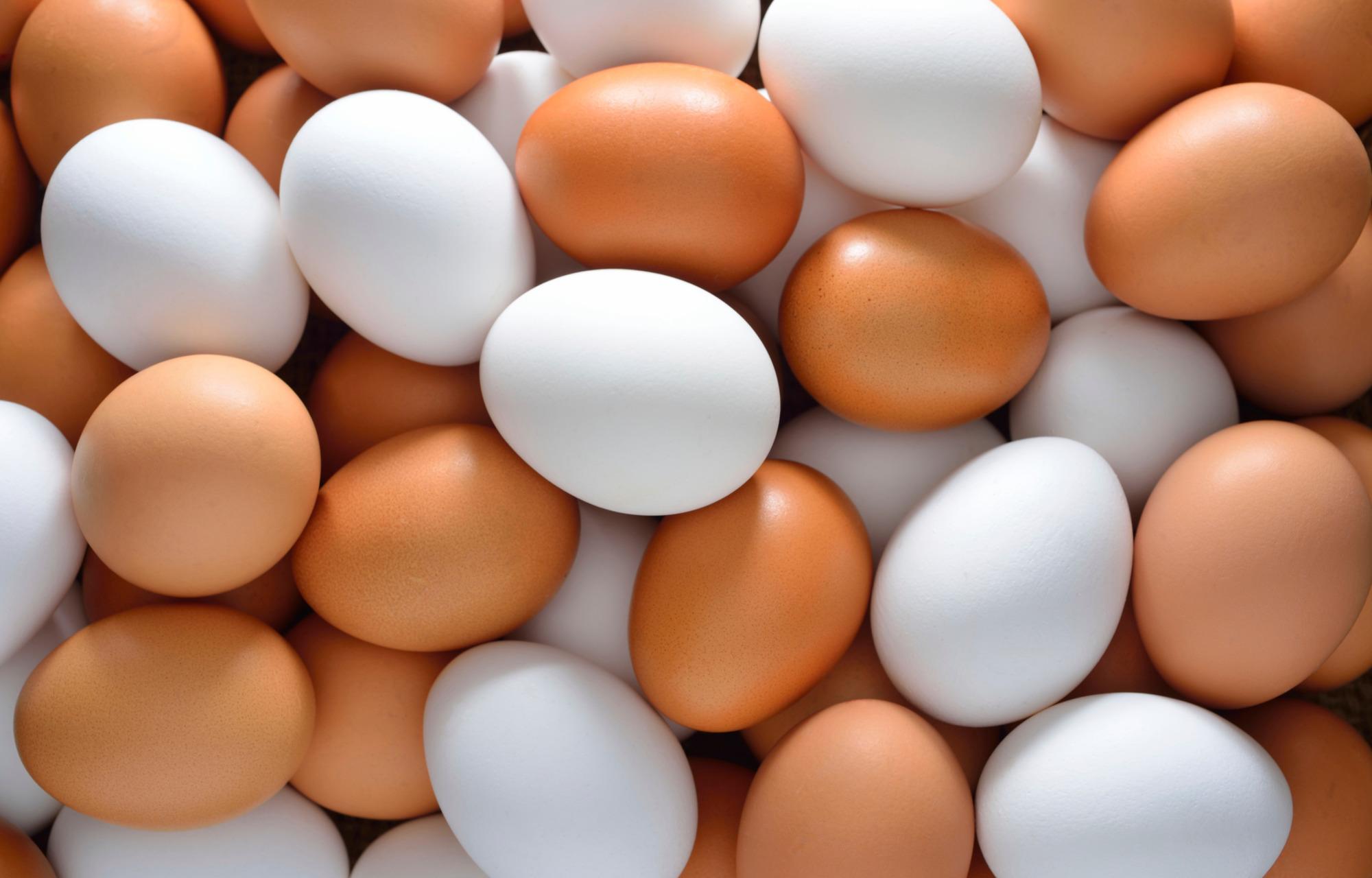 Когда начинают нестись куры: количество яиц и что делать, если они без скорлупы || Как курица несет яйца интересная информация