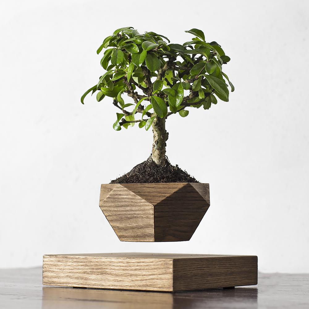 Купить Левитирующие растения леплант Wood бонсай темный, inmyroom, Россия