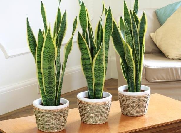 Фотография:  в стиле , Декор интерьера, Советы, растения для ленивых, растения для интерьера – фото на InMyRoom.ru