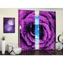 Фотошторы для гостиной: Фиолетовая роза