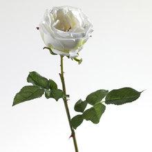 Декор Роза