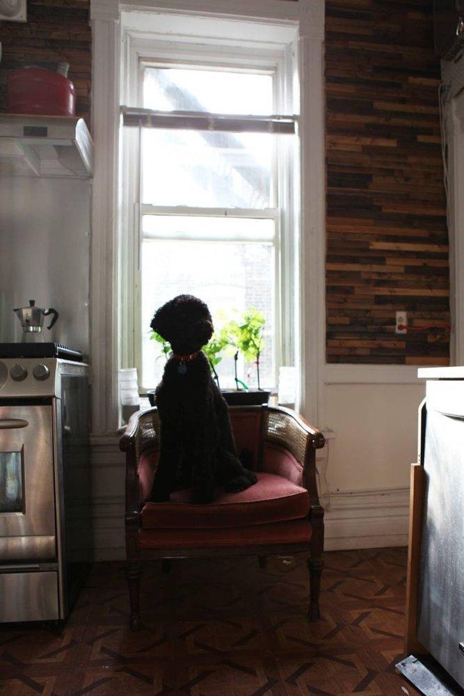 Фотография: Прочее в стиле , Квартира, США, Дома и квартиры, Библиотека – фото на InMyRoom.ru