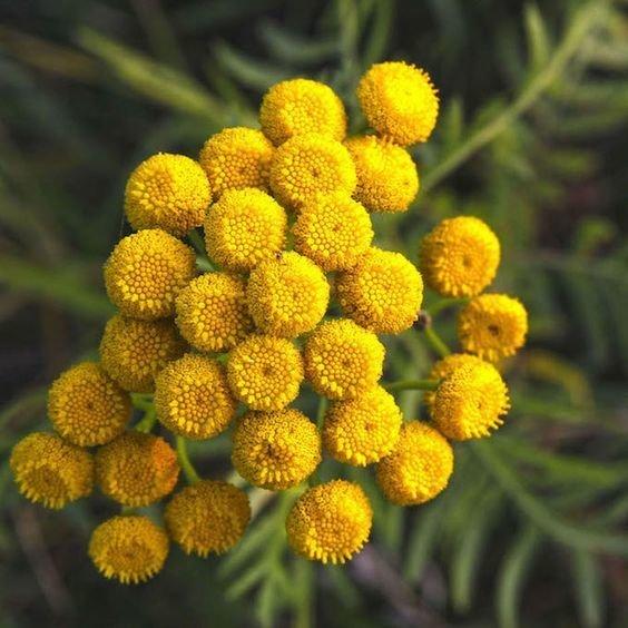 Фотография: Флористика в стиле , Советы, Дом и дача, как выбрать растения для сада, растения – фото на INMYROOM