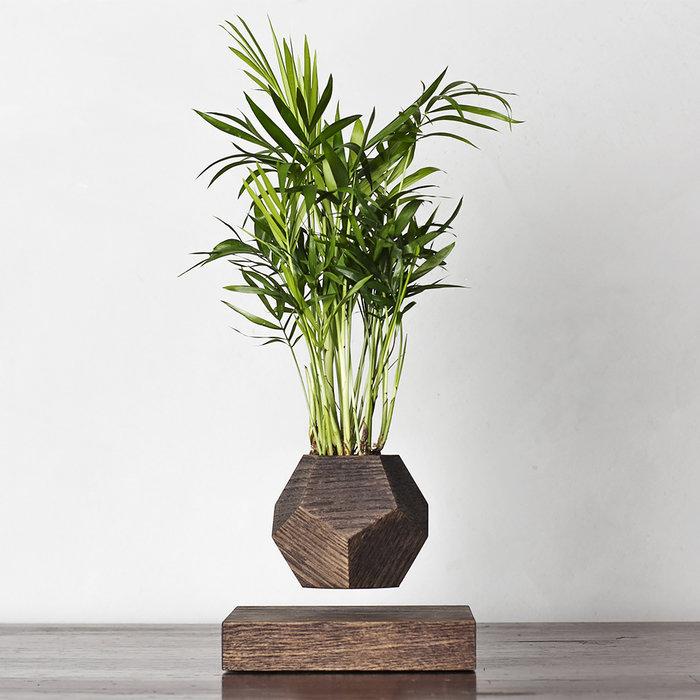 Левитирующие растения Леплант Wood Хамедорея венге