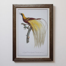 Постер Райская птица 0.3