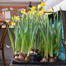 Фото из портфолио Переделка одной детской или сад в чемодане – фотографии дизайна интерьеров на INMYROOM