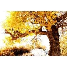 """Дизайнерская картина на холсте """"Золотые ветви"""""""