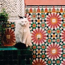 Фотография: Декор в стиле Кантри, Восточный – фото на InMyRoom.ru