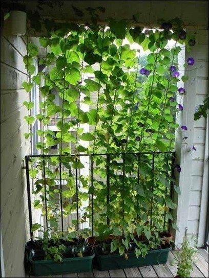 Фотография: Спальня в стиле Современный, Балкон, Флористика, Стиль жизни – фото на InMyRoom.ru