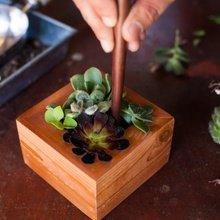 Фото из портфолио Домашние растения – фотографии дизайна интерьеров на INMYROOM