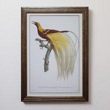 Райская птица 0.3
