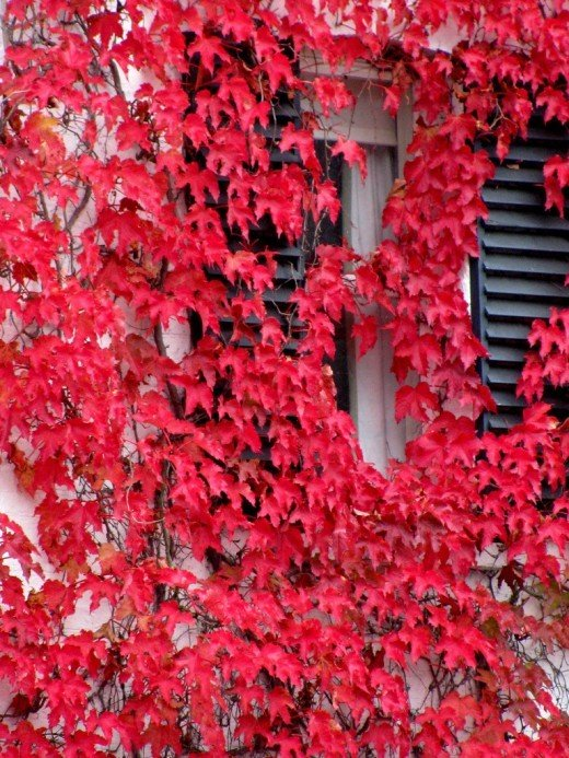 Фотография: Прочее в стиле , Балкон, Декор интерьера, DIY, Дом, Флористика, Стиль жизни, Цветы, специальная тема: балконы – фото на InMyRoom.ru