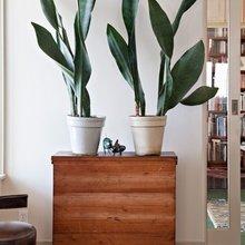 Фото из портфолио Домашние растения – фотографии дизайна интерьеров на InMyRoom.ru