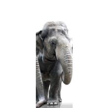 """Дизайнерская модульная картина """"Слоненок и его семья"""""""