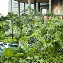 Фотография: Ландшафт в стиле Современный, Дома и квартиры, Городские места, Бразилия – фото на InMyRoom.ru