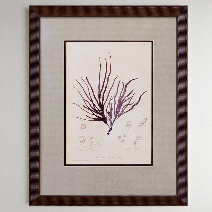 Purple corals 0.1