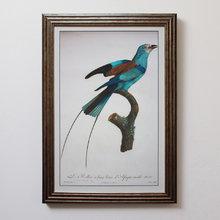 Постер Райская птица 0.2