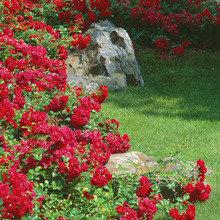 Фото из портфолио Горки 2. Нижний сад – фотографии дизайна интерьеров на INMYROOM