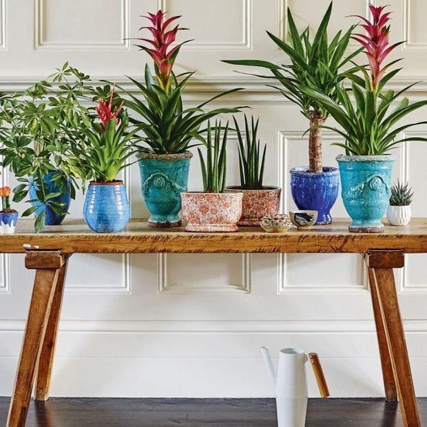 Фотография: Флористика в стиле , Декор интерьера, Зеленый, растения в горшках в интерьере, комнатные растения для ванной комнаты – фото на INMYROOM