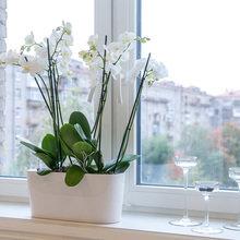 Фотография: Флористика в стиле , Гостиная, Декор интерьера, Интерьер комнат, Тема месяца – фото на InMyRoom.ru