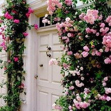 Фотография: Флористика в стиле , Прихожая, Интерьер комнат – фото на InMyRoom.ru