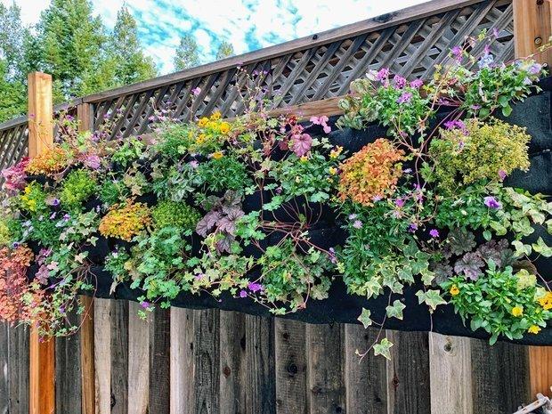 Фотография: Флористика в стиле , Советы, Дача, ландшафтные работы, вертикальное озеленение – фото на INMYROOM