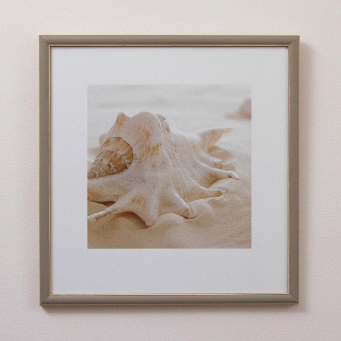 Морские раковины цвета беж 0.1