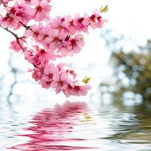 "Декоративная картина на холсте ""Цветы вишни"""