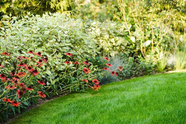 Фотография: Флористика в стиле , Советы, Derevo Park, как выбрать растения для сада, осенние посадки, огород – фото на INMYROOM