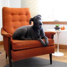 Фотография: Мебель и свет в стиле , Декор интерьера, Декор дома, Кресло – фото на InMyRoom.ru