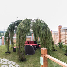 Фотография: Ландшафт в стиле Современный, Стиль жизни, Дачный ответ – фото на InMyRoom.ru