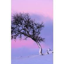 """Покрывало с печатью """"Дерево на закате"""""""