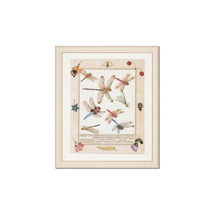 Бабочки и стрекозы