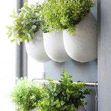 Фотография: Декор в стиле Эко, Балкон, Советы, Зеленый, Оксана Шабалина, овощи на балконе, сад пряных трав на балконе, вертикальное озеленение, что выращивать в тени, огород на балконе, мини-огород на балконе – фото на InMyRoom.ru