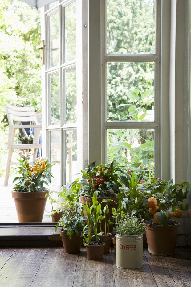 Фотография: Флористика в стиле Эко, Балкон, Квартира, Ландшафт, Дом и дача, огород на балконе, мини-огород на балконе, Leroy Merlin, Наталия Шушлебина – фото на INMYROOM