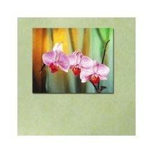 Декоративная картина: Великолепие орхидеи
