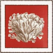Кораллы белые