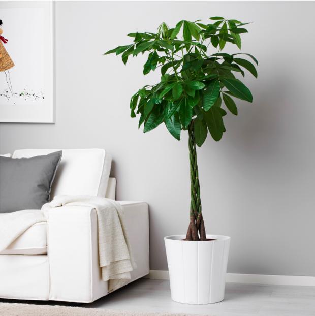 Фотография: Флористика в стиле Скандинавский, Декор интерьера, Советы, растения для ленивых, растения для интерьера – фото на INMYROOM