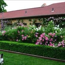 Фотография: Ландшафт в стиле , Терраса, Советы, Зеленый, Дом и дача, Мария Шумская, участок у таунхауса, маленький сад – фото на InMyRoom.ru