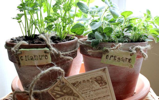 Фотография:  в стиле , Балкон, Советы, Зеленый, Оксана Шабалина, овощи на балконе, сад пряных трав на балконе, вертикальное озеленение, что выращивать в тени, огород на балконе, мини-огород на балконе – фото на InMyRoom.ru
