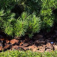 Фотография: Ландшафт в стиле Современный, Дом, Стиль жизни, Дача, Дачный ответ, Беседка – фото на InMyRoom.ru