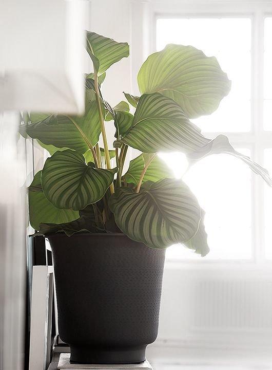 Фотография:  в стиле , Ванная, Флористика, Советы, комнатные растения для ванной комнаты – фото на InMyRoom.ru