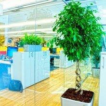 Фотография: Прочее в стиле Современный, Декор интерьера, Офисное пространство, Ландшафт, Стиль жизни – фото на InMyRoom.ru