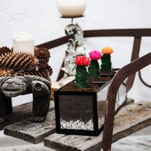 Фотография: Флористика в стиле , Декор интерьера, Советы, растения в интерьере, Vibe Life Technologies – фото на InMyRoom.ru