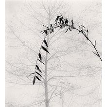Картина (репродукция, постер): Bamboo and Tree, Qingkou Village, Yunnan, China - Майкл Кенна