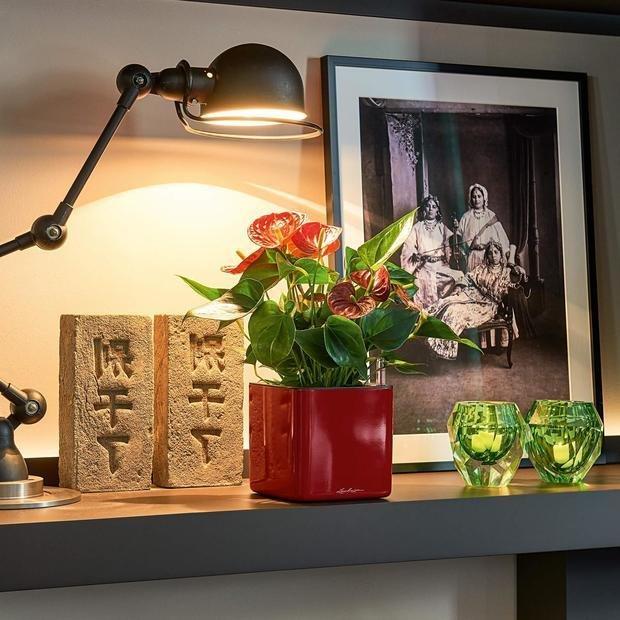 Фото из портфолио Цветочные кашпо Lechuza CUBE GLOSSY – фотографии дизайна интерьеров на INMYROOM