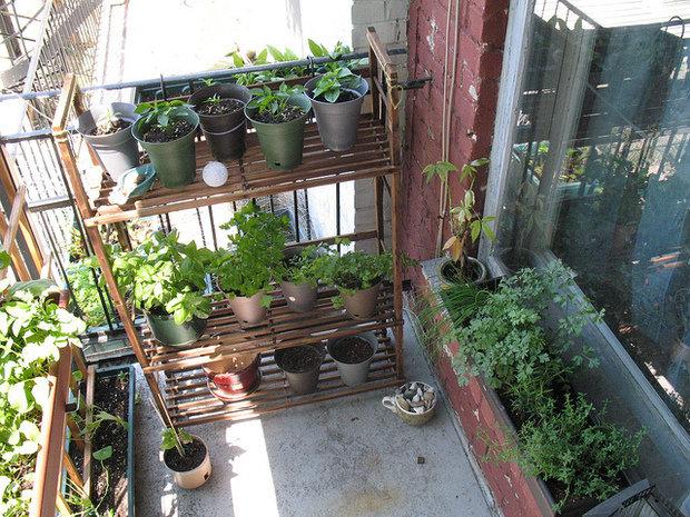 Рассада на балконе: фото выращивания.