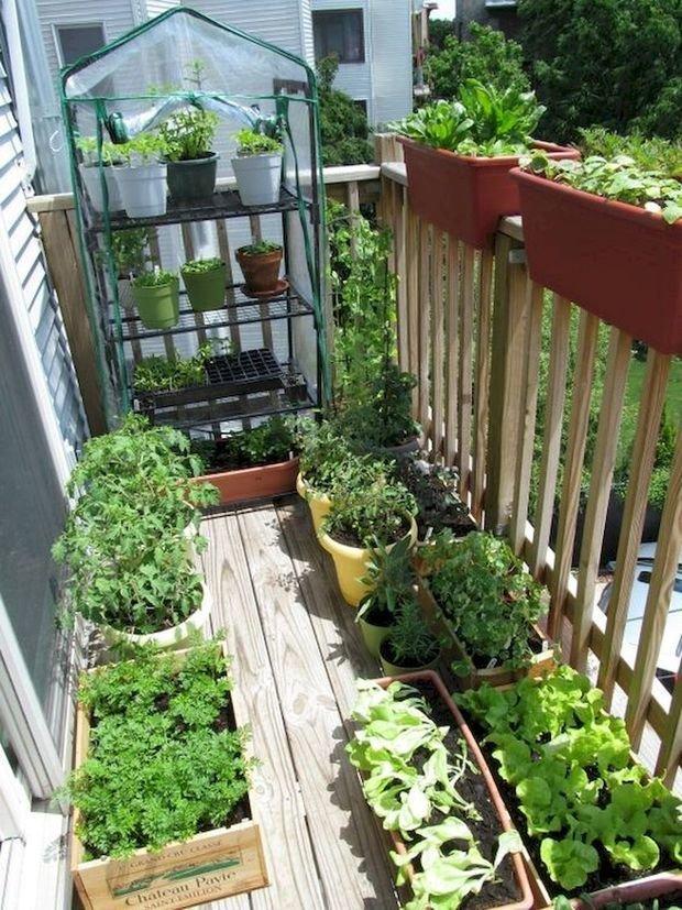 Фотография: Балкон в стиле Эко, Квартира, Ландшафт, Дом и дача, огород на балконе, мини-огород на балконе, Leroy Merlin, Наталия Шушлебина – фото на INMYROOM