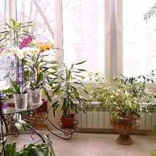 Фотография: Балкон в стиле Кантри, Флористика – фото на InMyRoom.ru