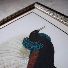 Постер Райская птица 0.4